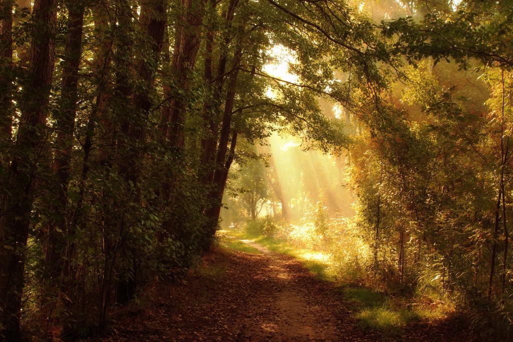 leśna ścieżka jesień